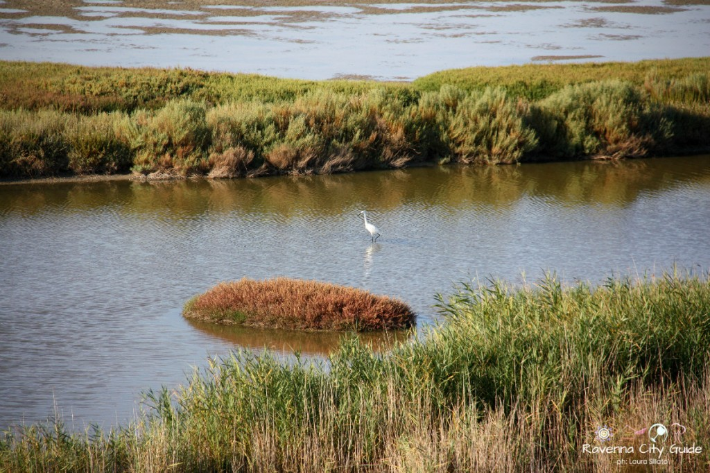 po delta natural park in ravenna